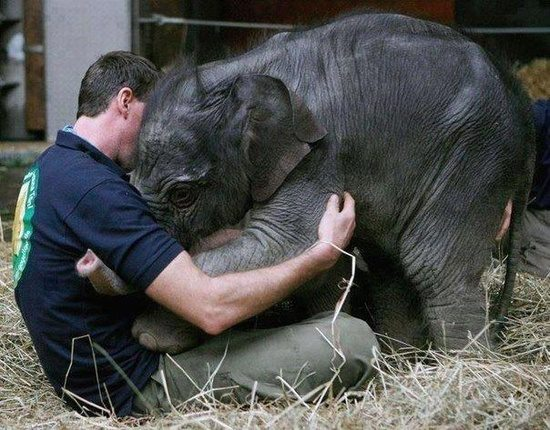 A facebook offering from Information Blitz.  Orphaned elephant.