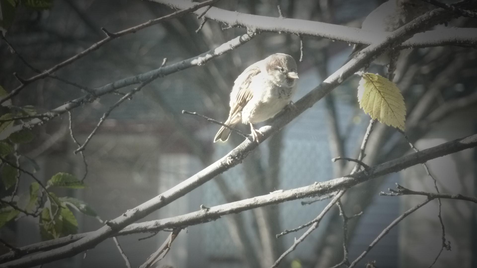 One Sparrow Photo Credit: Kathleen Moors