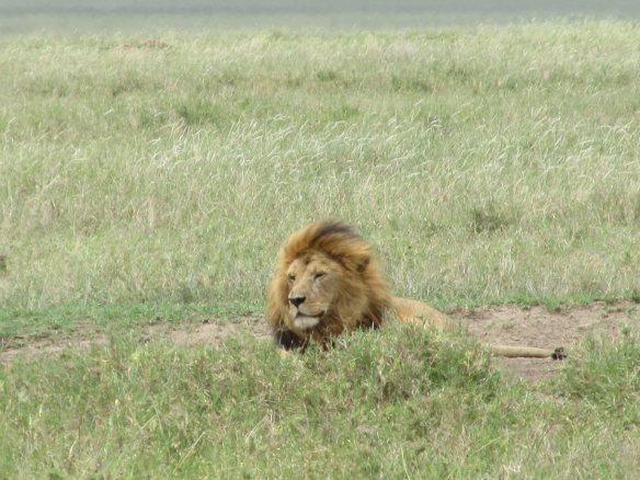 Elizabeth Miles Serengeti