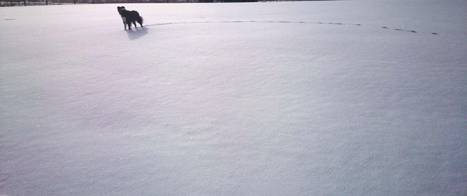 Cell January 31, 2015 Frank's Flats Fresh Snow Max 004