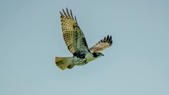 Mike's Osprey