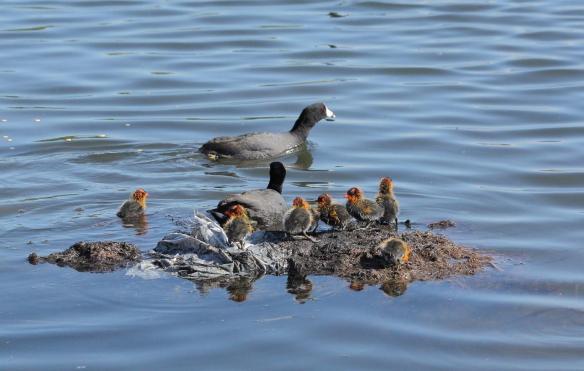 Photo Credit: Rob English Birds Calgary 2011
