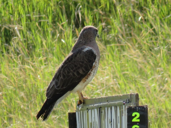 Kath's Canon June 19, 2015 Garden Frank's Flats Birds Super 3s 145