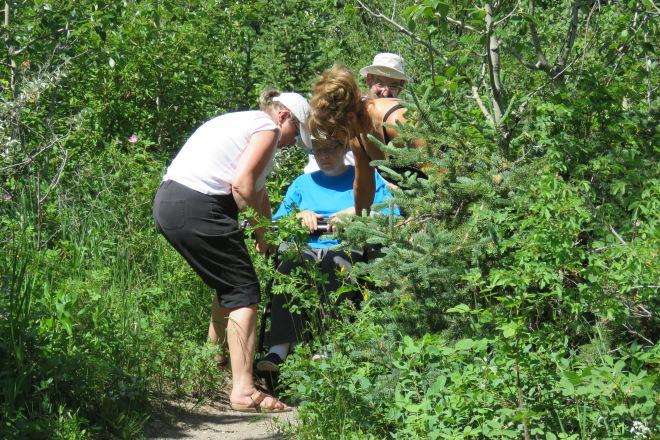 Kath's Canon June 28, 2015 Flower Walk 069