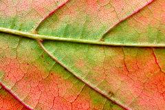 autumn-leaf-macro-291405