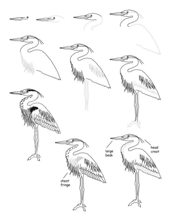 Blue Heron Step by Step
