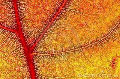 hazy-close-up-autumn-leaf-2236406