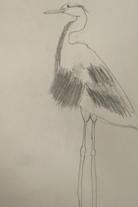 Kath's Canon, September 23, 2015 Heron Art Grade 4 Poundmaker 001