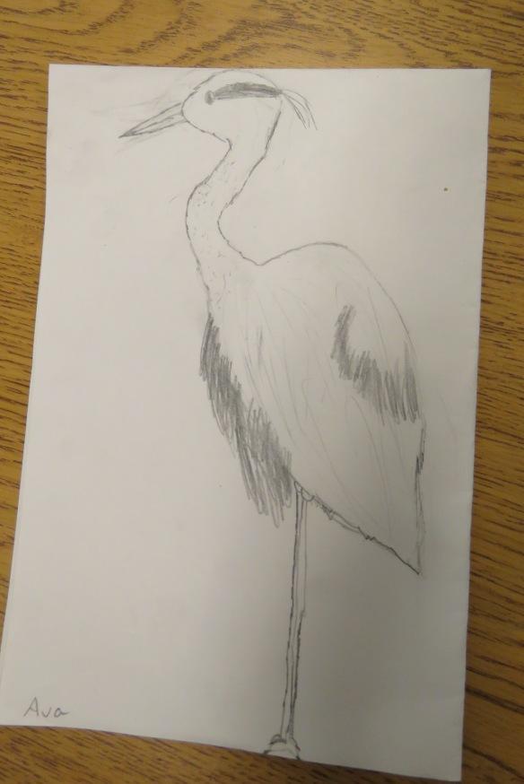 Kath's Canon, September 23, 2015 Heron Art Grade 4 Poundmaker 026