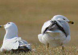 Facebook 44 Gulls